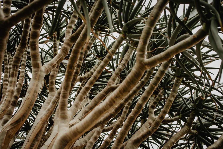 Detailfoto einer mediterranen Pflanze.