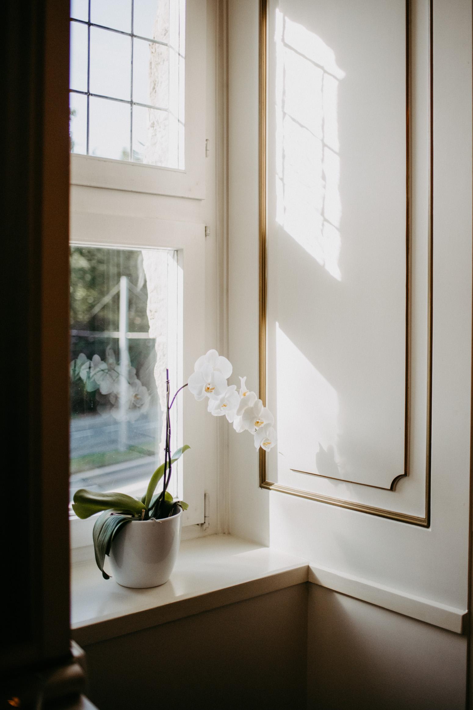 weiße Orchidee auf der Fensterbank im Standesamt im Schloss Broich